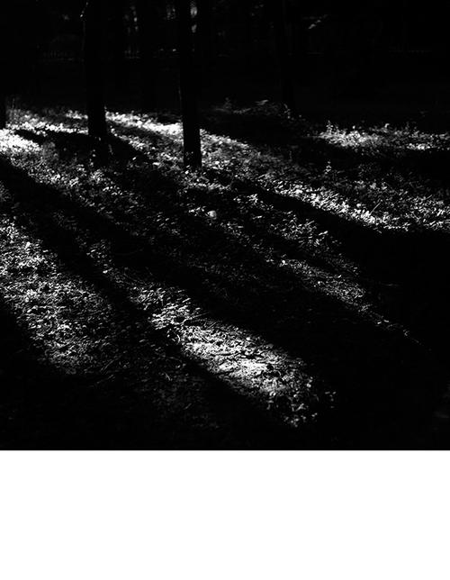 冬日 浓郁的黑 忧郁的白