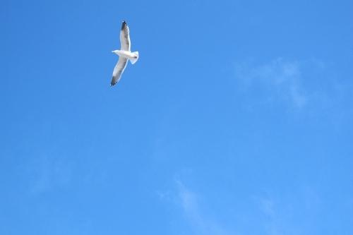 San Francisco 的天空和海鸥果然是绝配