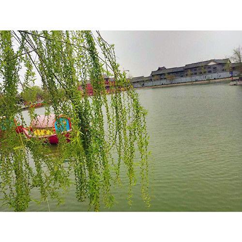 QQ图片20180125195451_副本.jpg