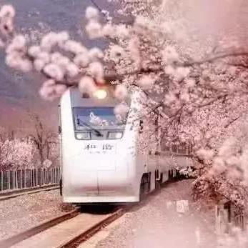 赏樱唯美拍照圣地 梦幻至极