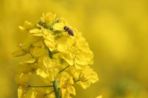最爱春天里的那抹亮黄